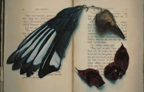 Feathers, a bird skull and rose petals laid on a book